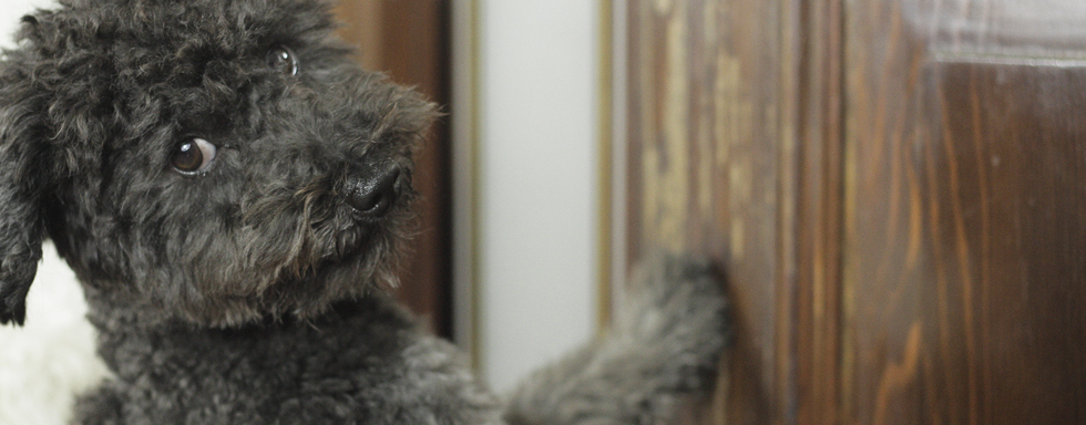 A proposito di sverniciatura legno, nell'immagine un dolce cane che guarda in macchina e intanto rovina grattandola una porta in legno